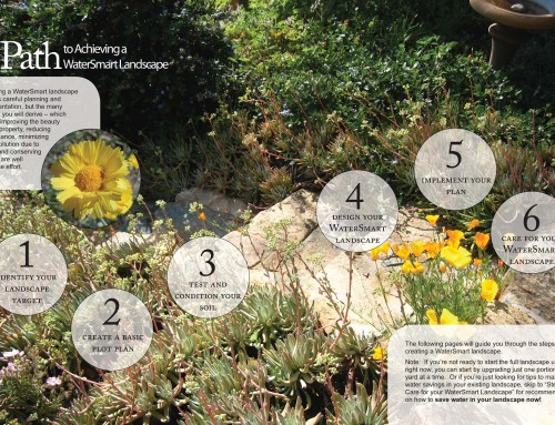 A Homeowner's Guide to WaterSmart Landscape