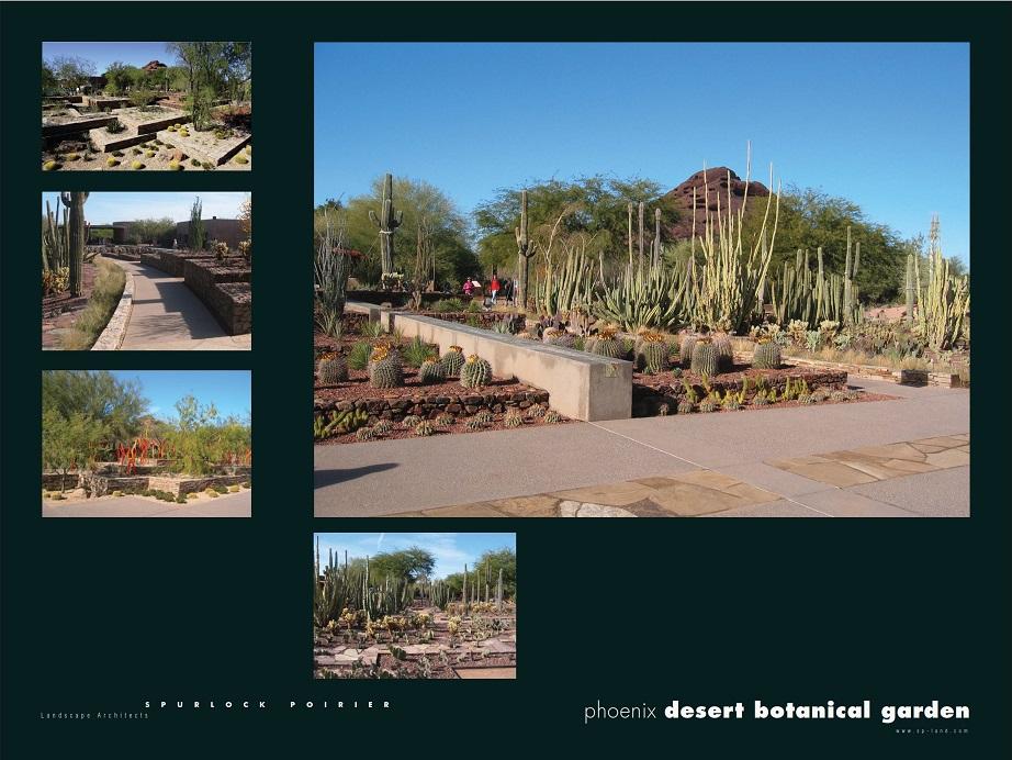 Desert Botanical Garden San Diego Chapter American