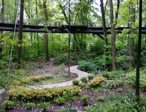 Atlanta Botanical Garden: Gardens in Storza Woods